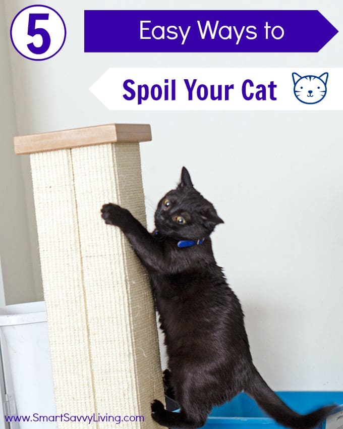 5 Easy Ways to Spoil Your Cat