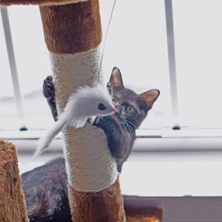 pip-on-cat-tree