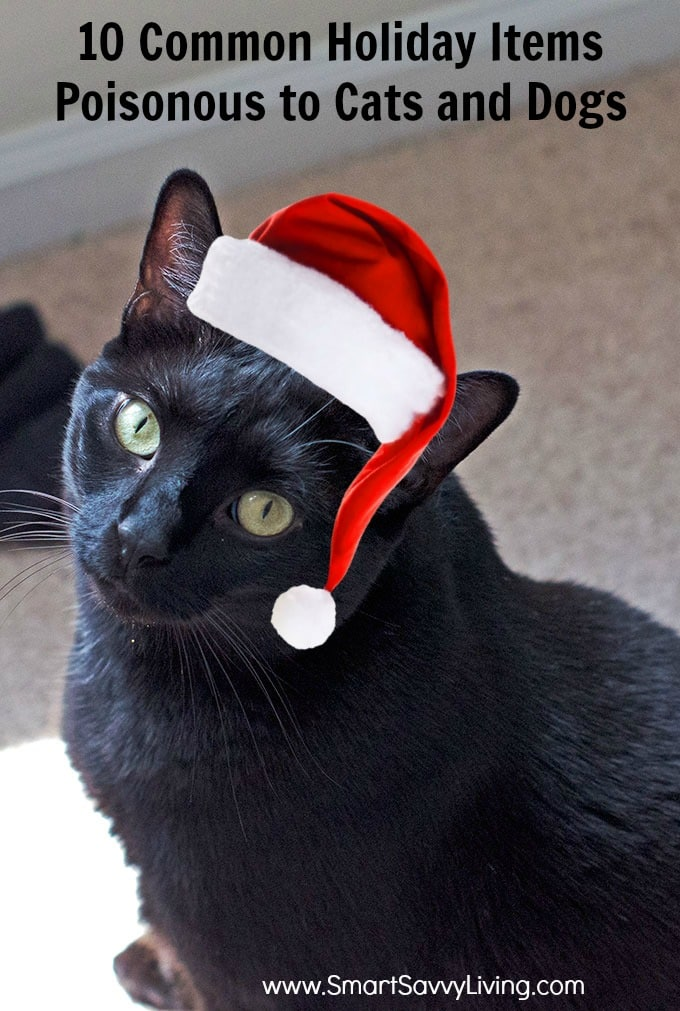 10 Common Holiday Items Poisonous to Cats and Dogs b