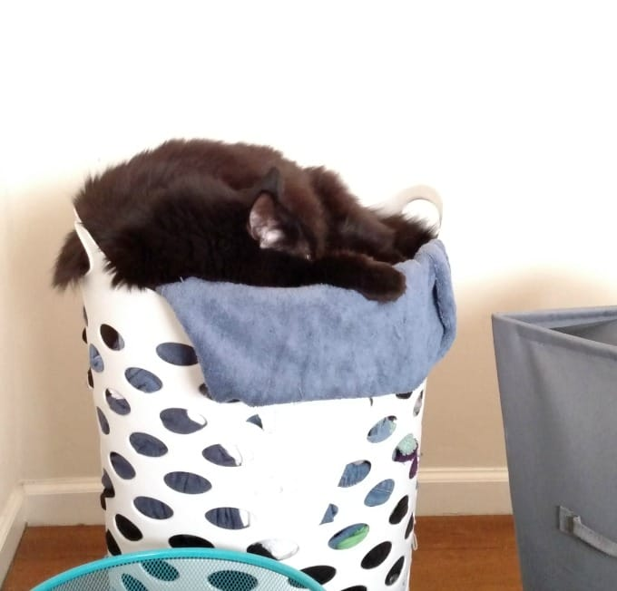 Cat Using Laundry as a Bed